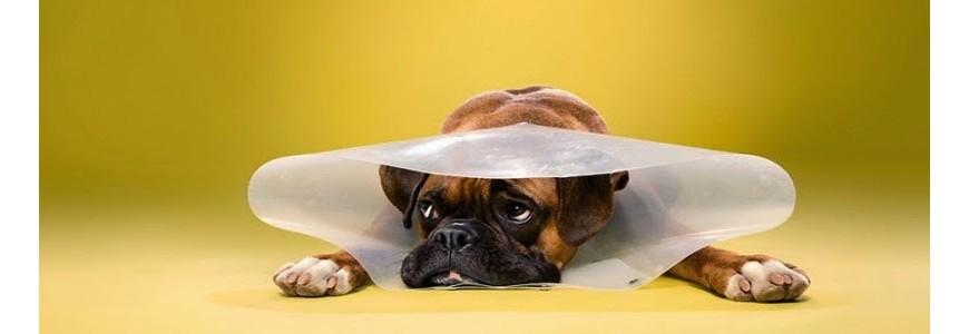 Cuidados veterinarios